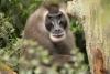 3. März: Tag des Artenschutzes im Erlebniszoo Hannover