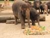 Elefantöses Geburtstagsgeschenk