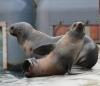 Seebär-Jungtier Myrthe für alle Wetter gerüstet